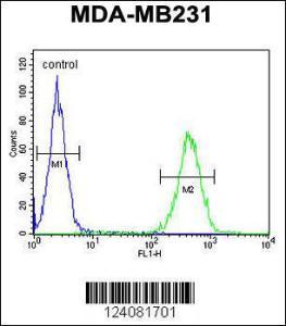 Anti-ST7 Rabbit Polyclonal Antibody (HRP (Horseradish Peroxidase))