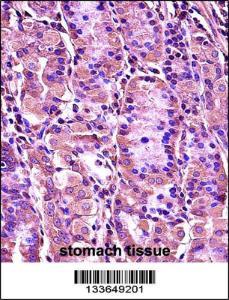 Anti-SYT1 Rabbit Polyclonal Antibody (AP (Alkaline Phosphatase))