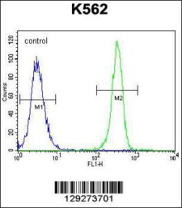 Anti-SMTNL1 Rabbit Polyclonal Antibody (APC (Allophycocyanin))