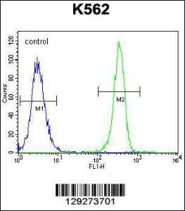Anti-SMTNL1 Rabbit Polyclonal Antibody (HRP (Horseradish Peroxidase))