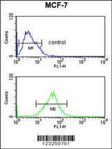 Anti-SNRPD3 Rabbit Polyclonal Antibody (APC (Allophycocyanin))