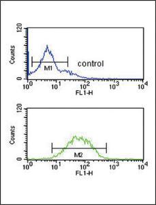 Anti-SPRY4-Y75 Rabbit Polyclonal Antibody (PE (Phycoerythrin))