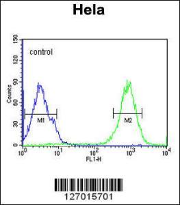 Anti-SPT13 Rabbit Polyclonal Antibody (FITC (Fluorescein Isothiocyanate))