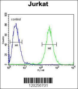 Anti-ST3GAL5 Rabbit Polyclonal Antibody (HRP (Horseradish Peroxidase))