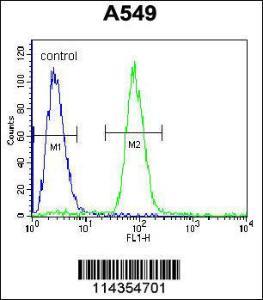 Anti-SOX3 Rabbit Polyclonal Antibody